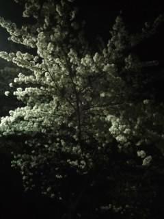 ミュージックビデオの「オレンジガール」の正体。